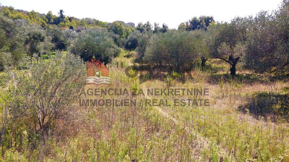 Land, 1115 m2, For Sale, Zadar-okolica - Kožino